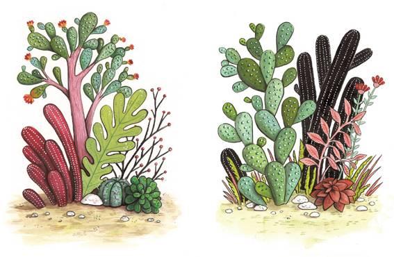 kaktus-copy_1030