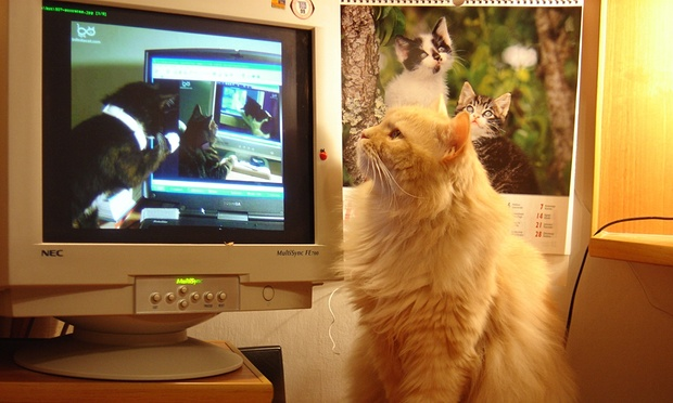 How Cats Took Over The Internet. Photograph: MoMI