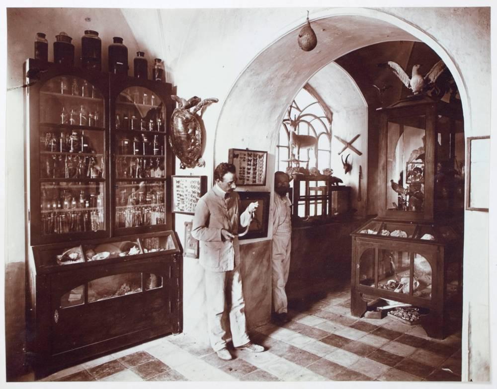 שץ ואהרוני, אוסף הטבע, מוזיאון ישראל