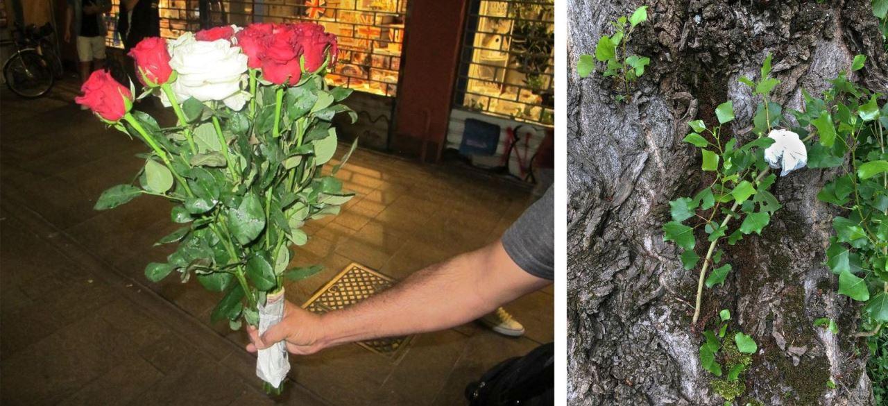 ורדים, צילום: עומר פולק
