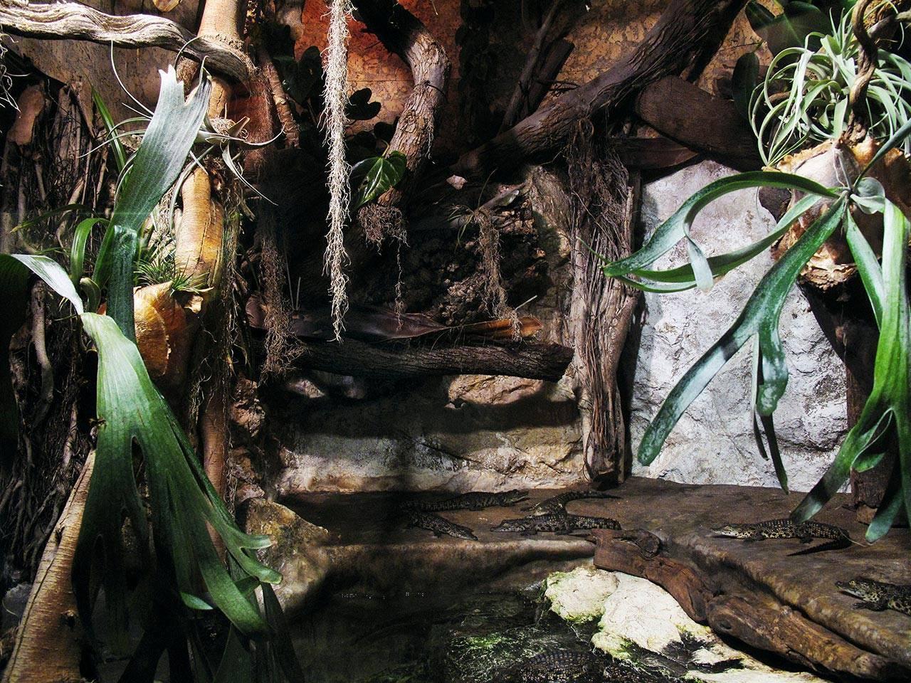 איילת השחר כהן, המערה