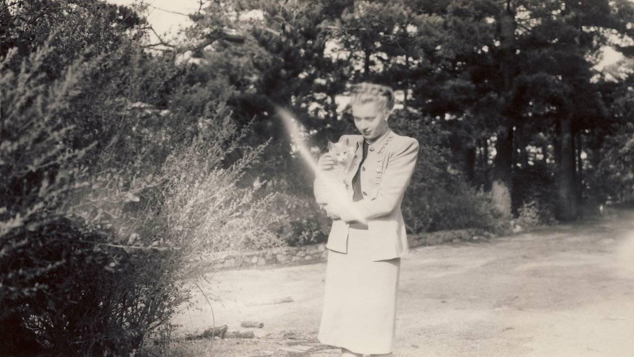 אליזבת לוין